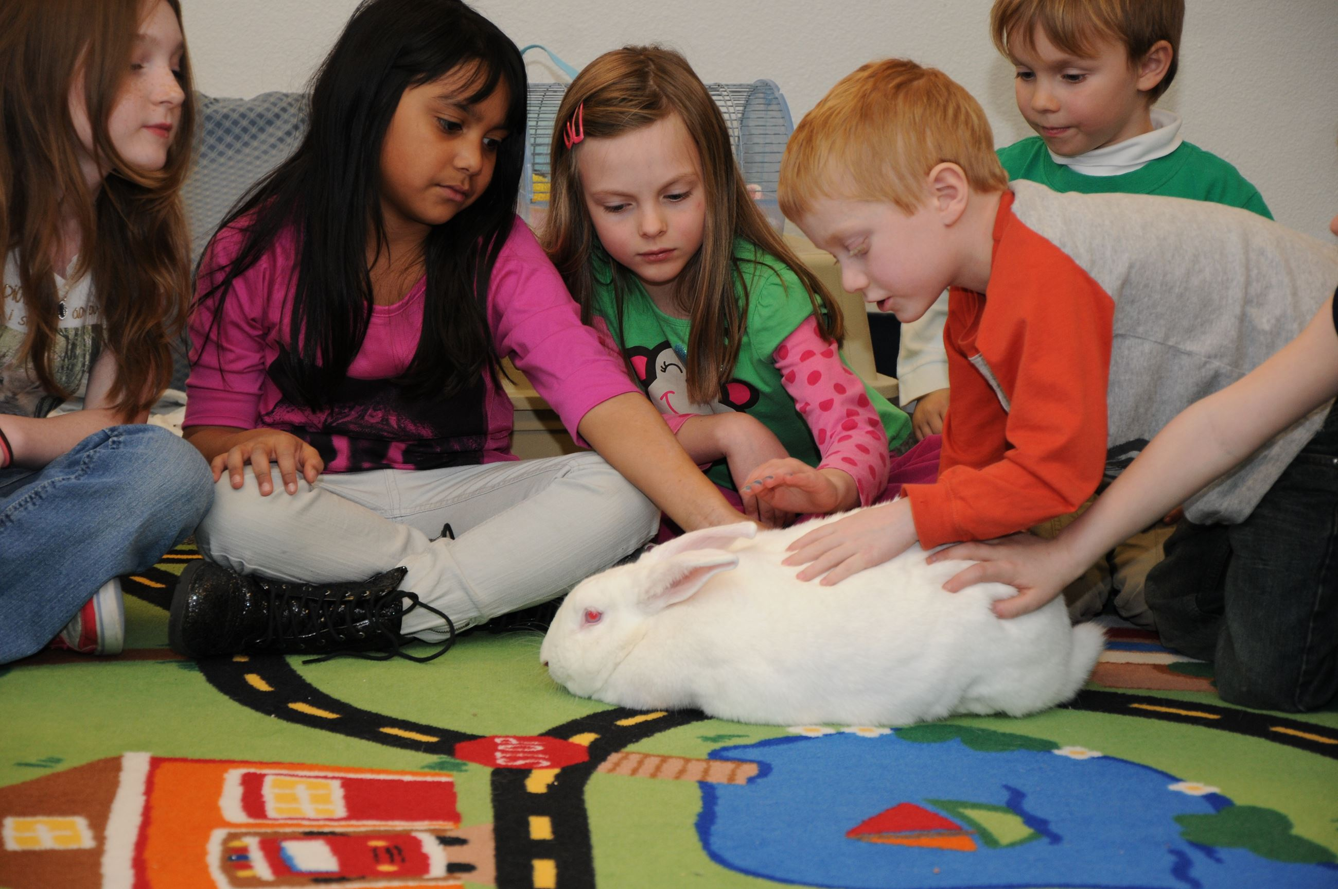 Children in Classroom Sit in Circle and Pet Large White Rabbit